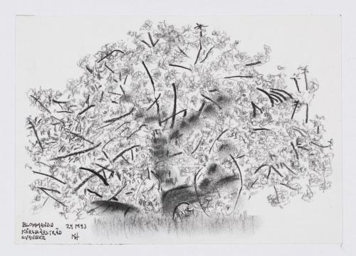 Blommande äppelträd, Bornholm, 2018, kol, 40x30 cm
